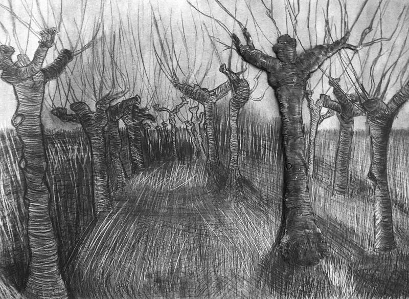 Pollard Birches and Clay by Lauren Hodges