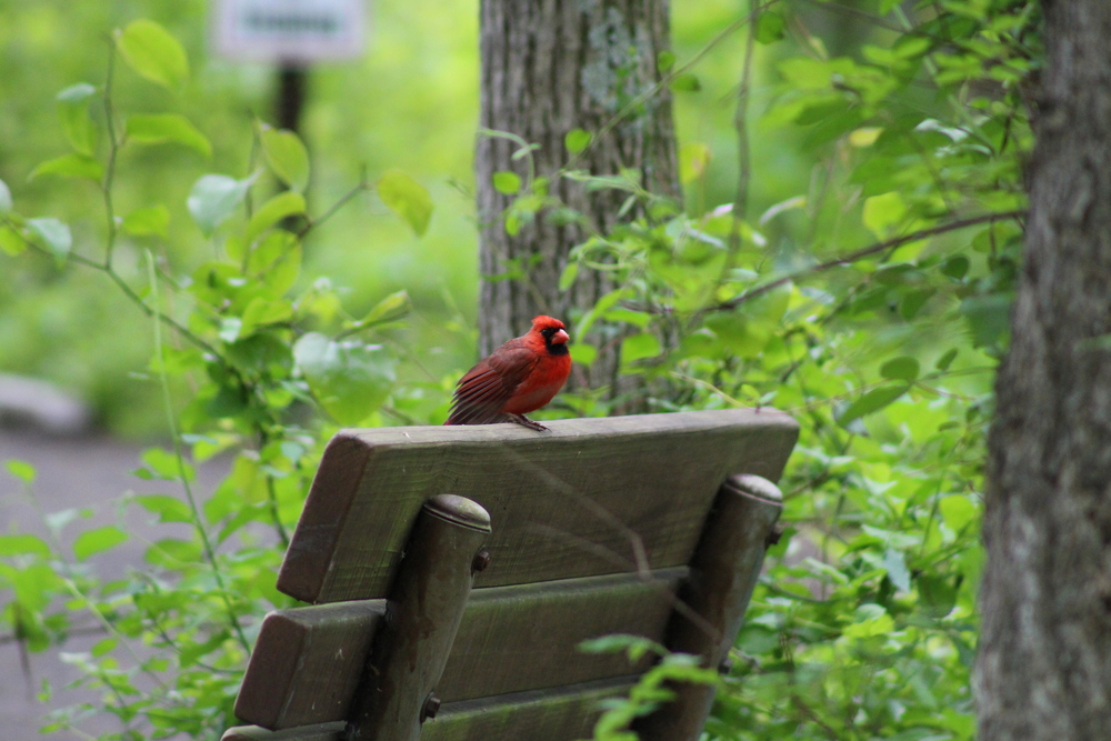 We're guessing you don't have to be from Ohio to see the state's bird flirting at Huntley Meadows.