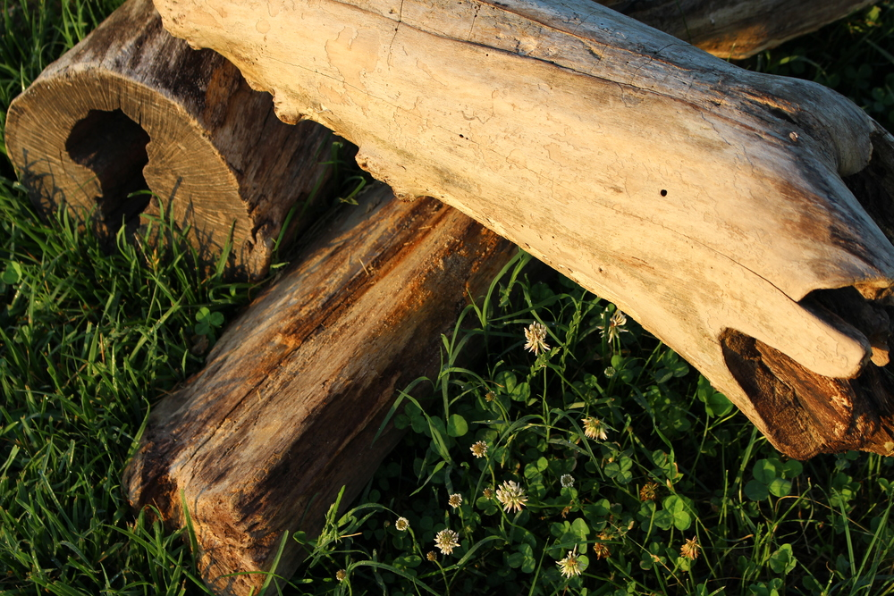 We won't judge you if you snatch up a sturdy piece of driftwood for a centerpiece in your home.