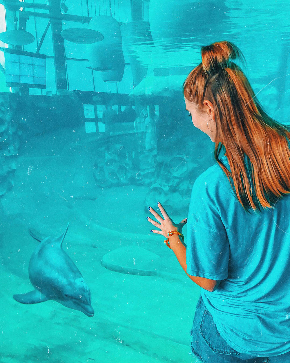 Dolphins at the Georgia Aquarium | Things to Do in Atlanta | Jordan Hefler