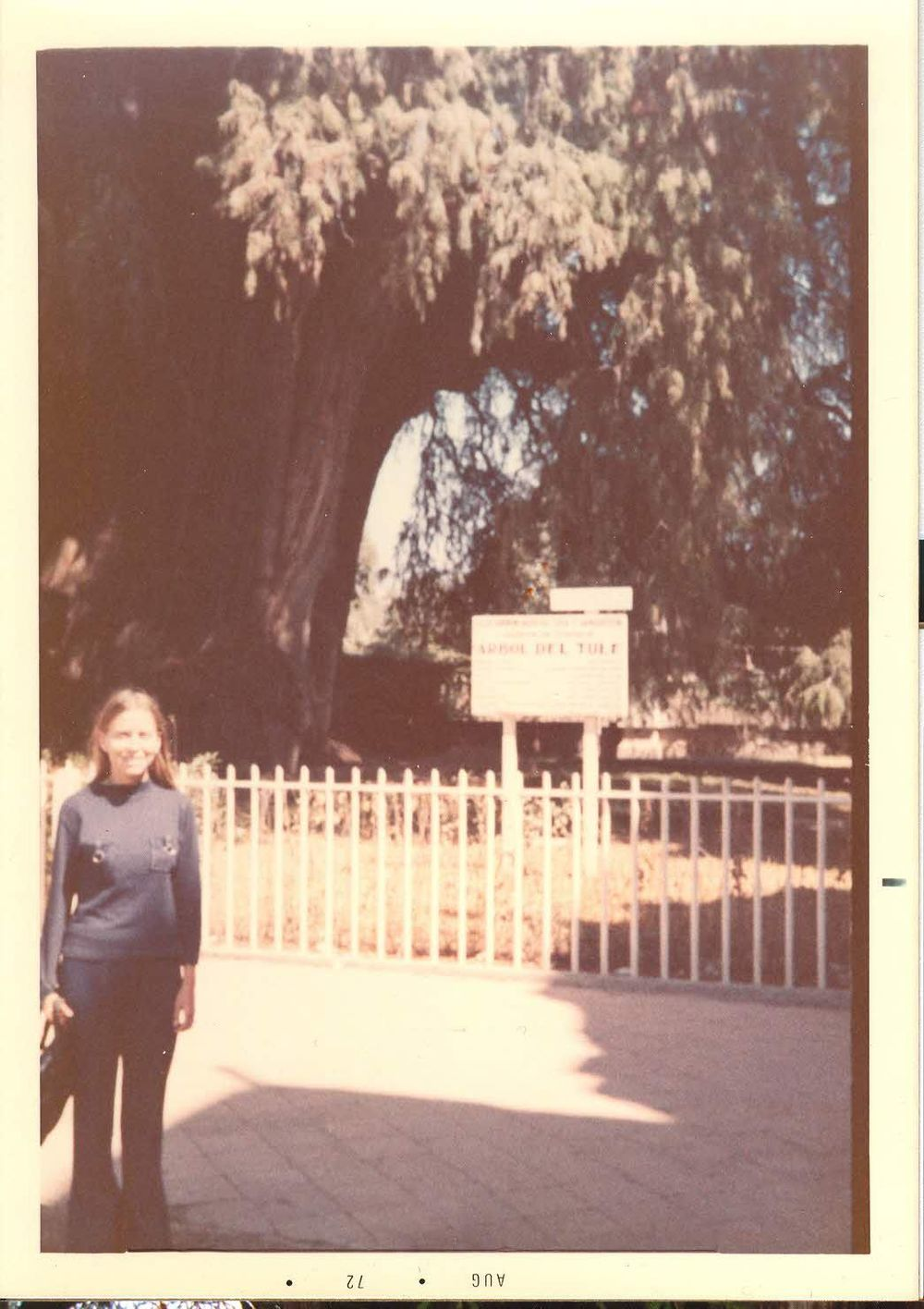 1972 - the Tule tree in Santa Maria del Tule, Oaxaca