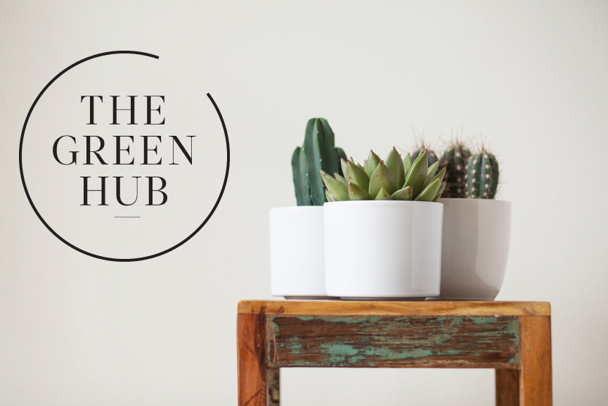 Logo with succulents.jpg