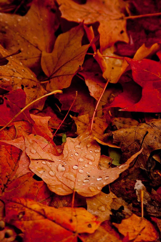 Autumn in Michigan Part 5