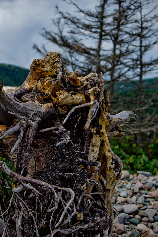 Cabot Trail Part 8