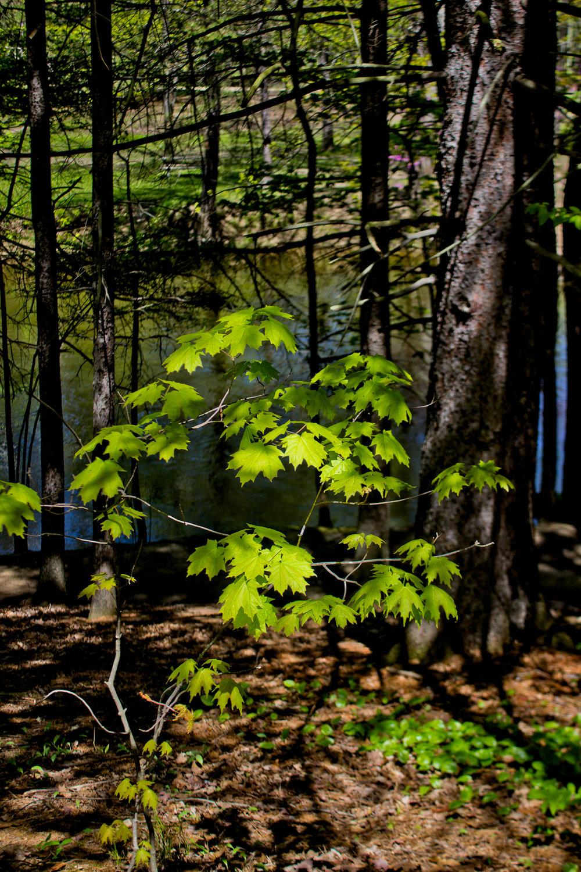 Richfield County Parks-14.jpg
