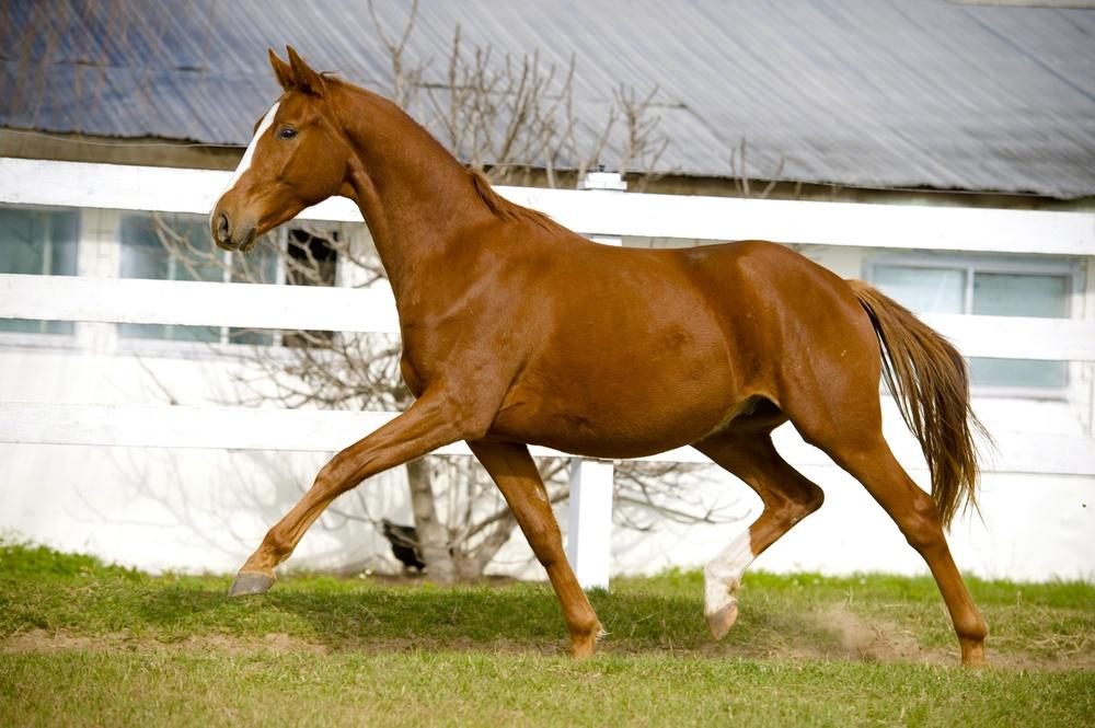 brinkman2011dec30-122-2.jpg