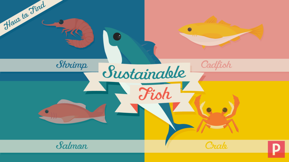 17_SustainableFish_05.png