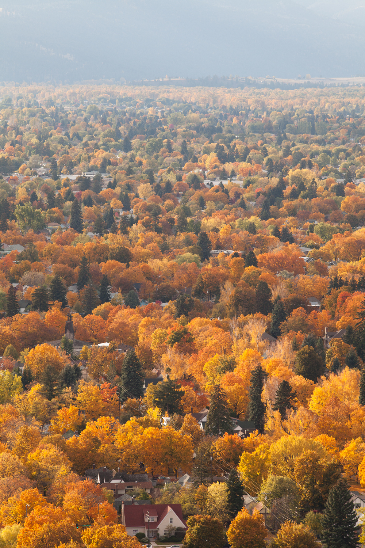 20111025_Autumn_1418.jpg