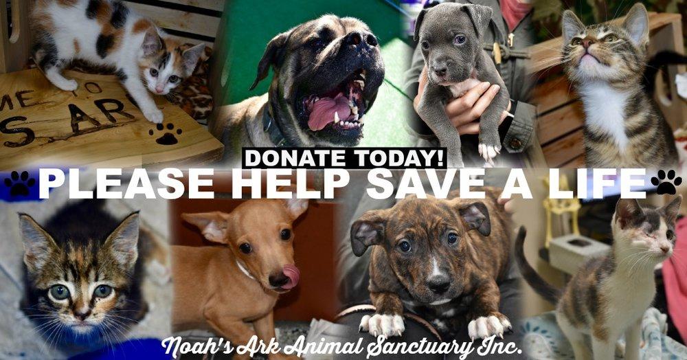 website donate today .jpg