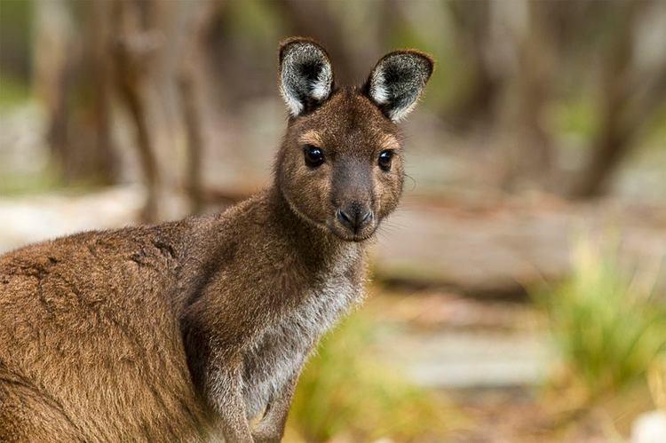 Green Screen Award nomination for Kangaroo Island: Life on the Edge