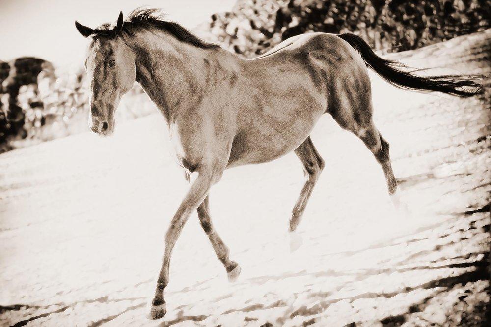 Equestrian Portraits | Stephen Grant Photography