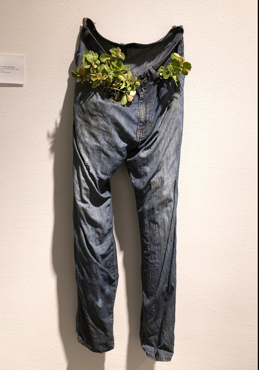 In Process Group Show, Creze la Esperanza, 2015, jeans & plant.jpg