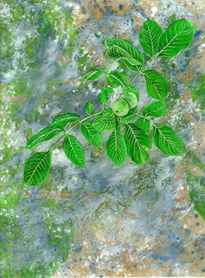 orchard010 FW.jpg