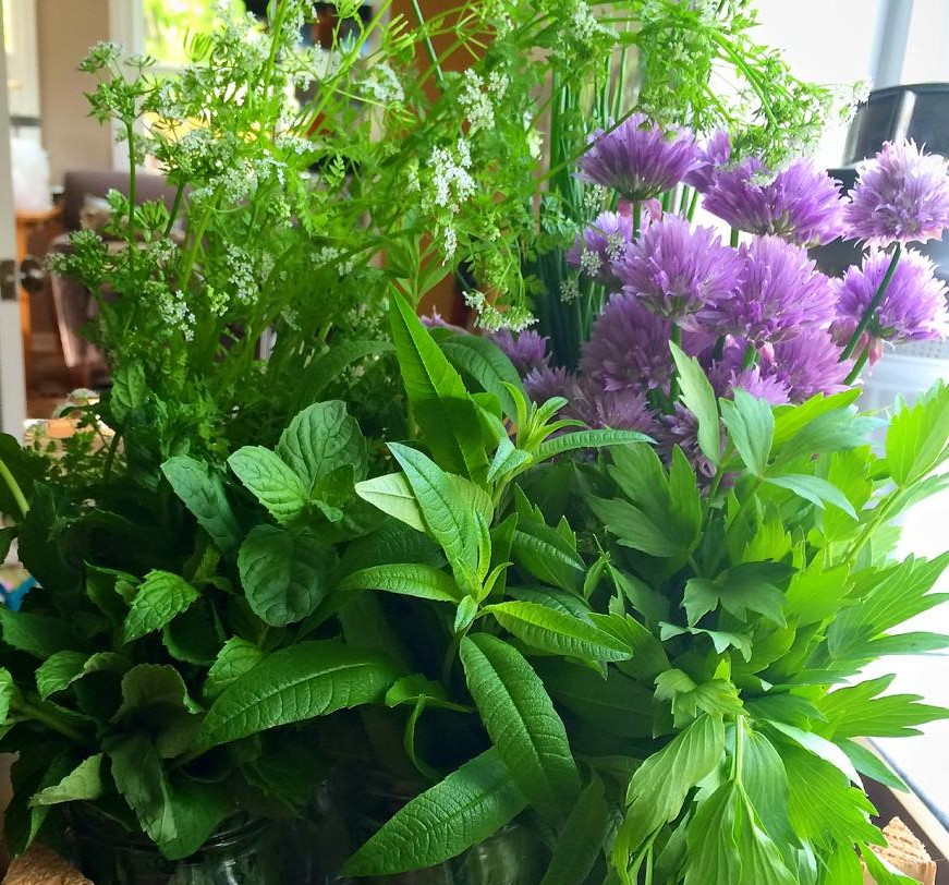 Leafy and flowering herbs