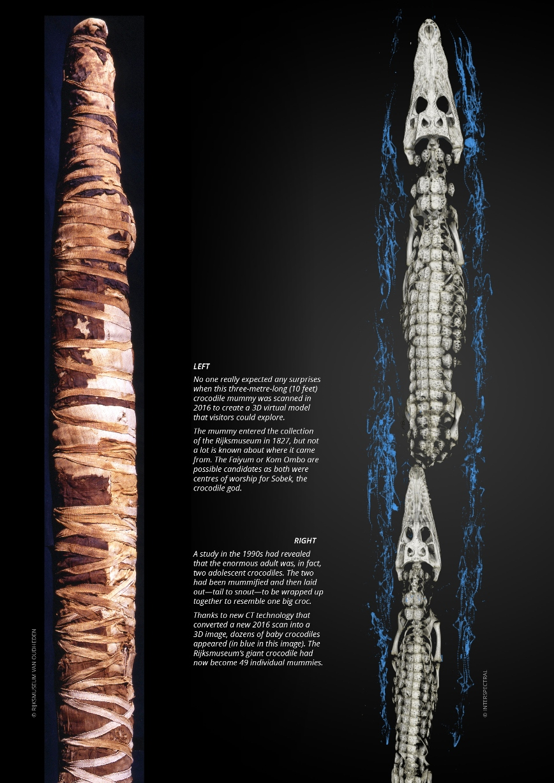 Nile 7, Crocodile 2B 35%.jpg