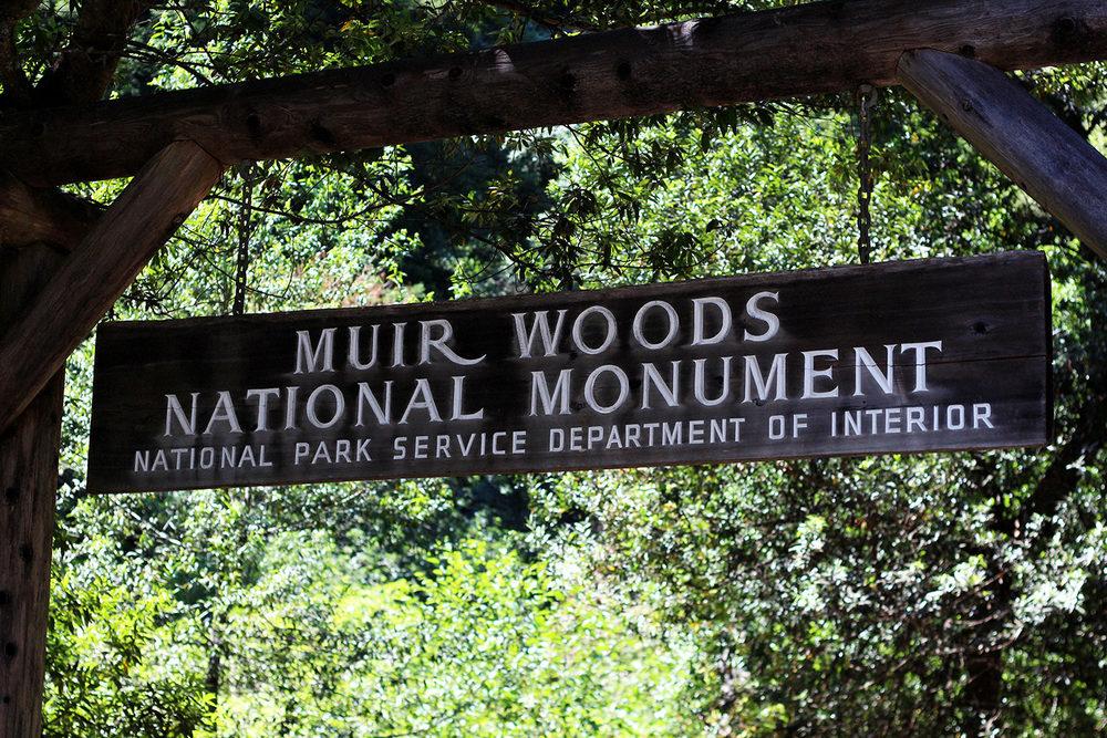 Muir_Woods.jpg