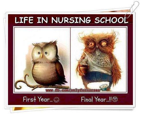 Image result for funny nurse memes