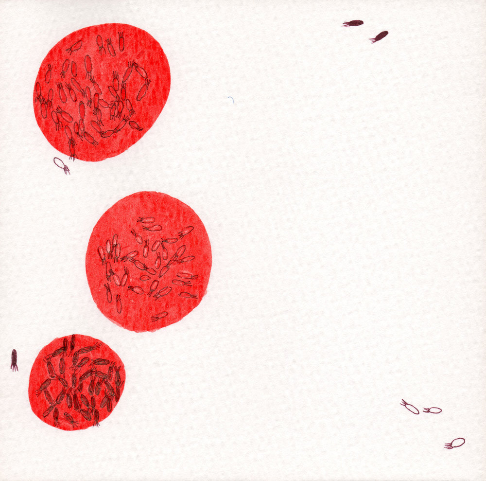 CELLULE.-ROSSO.-2.jpg