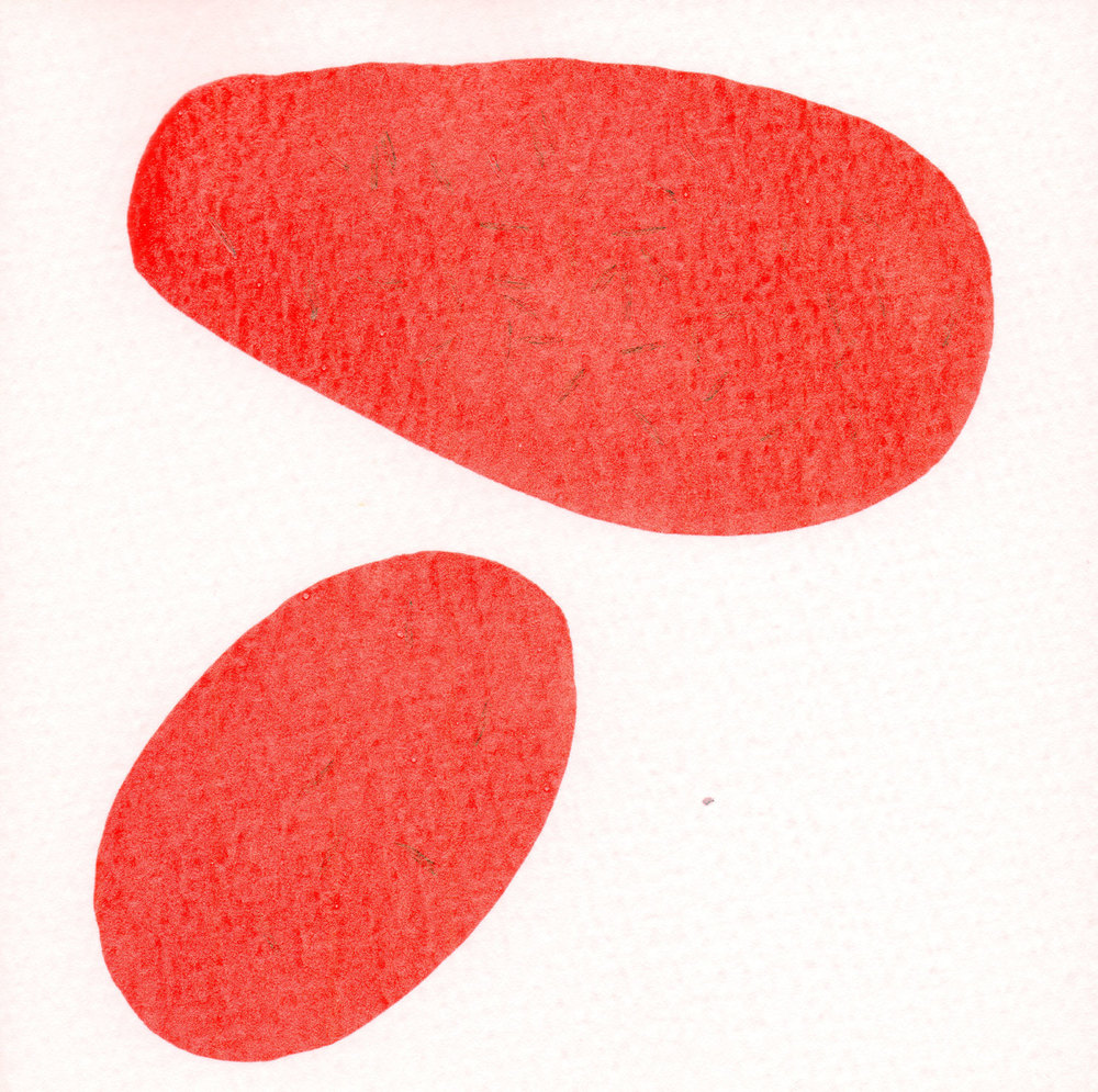 CELLULE.-ROSSO.--20.jpg