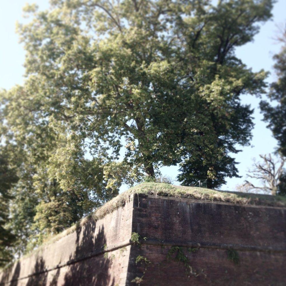 Giardini sospesi