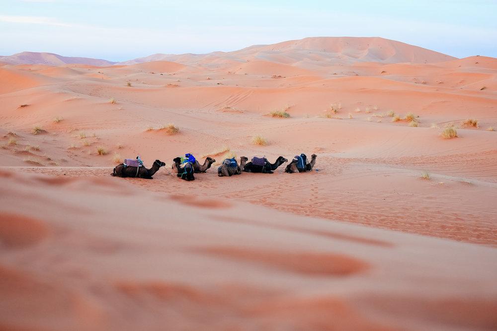 Morocco, 2016