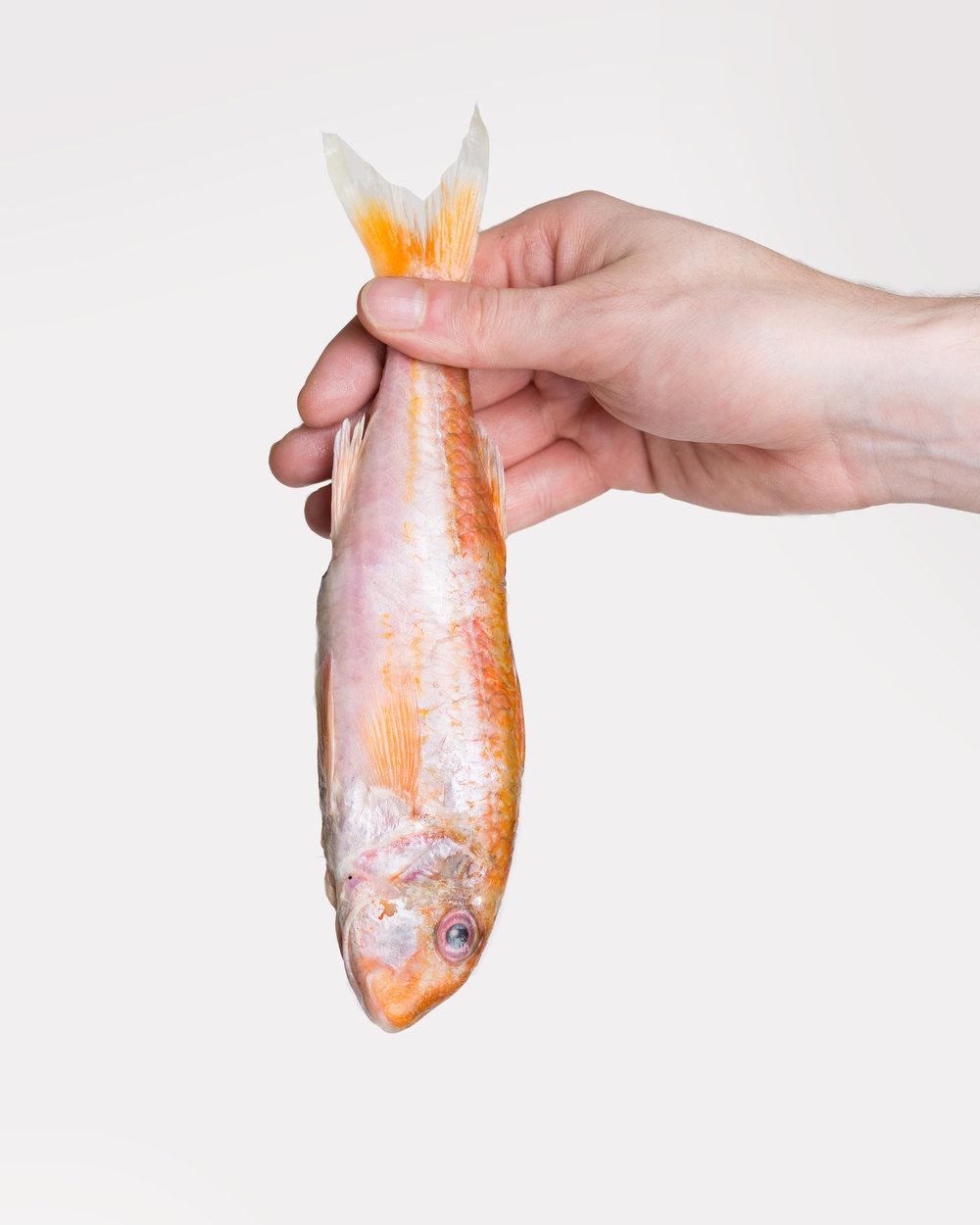 Fishhand.jpg