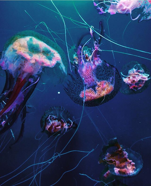 How pretty are these jellyfish?!