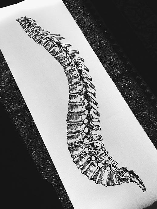 SpineWEB.jpg