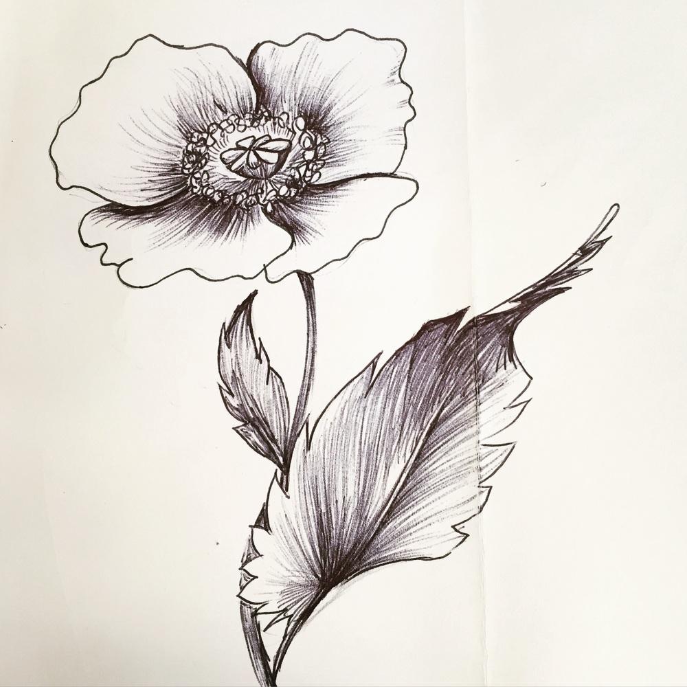 Day 74. Poppy flower.