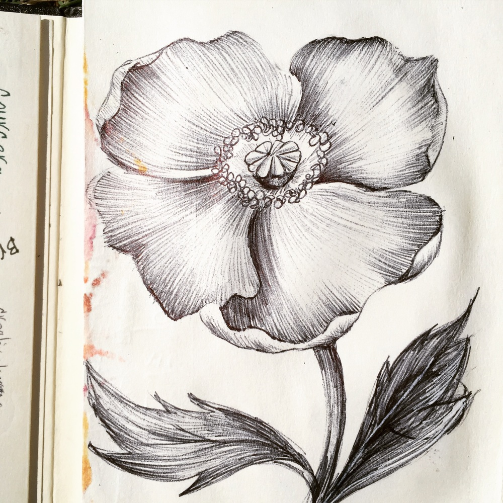 Day 73. More poppies.