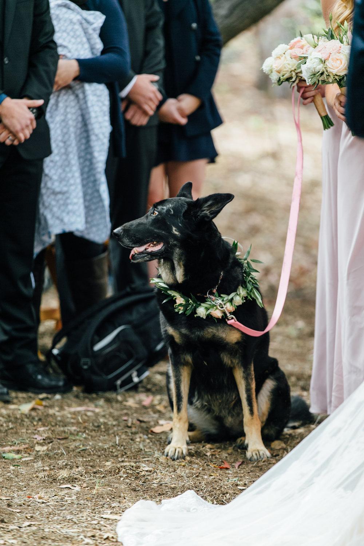 Hembree Wedding, 2017 (208 of 504).jpg