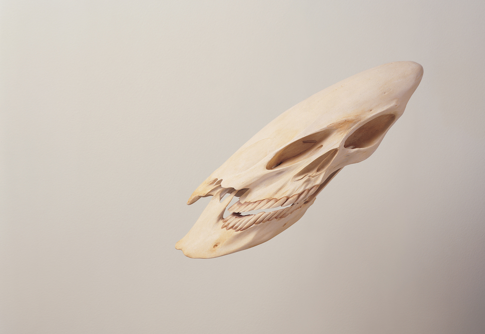 skull  (i), 2000 resin, bone, pigment 10 x 9 x 6 inches