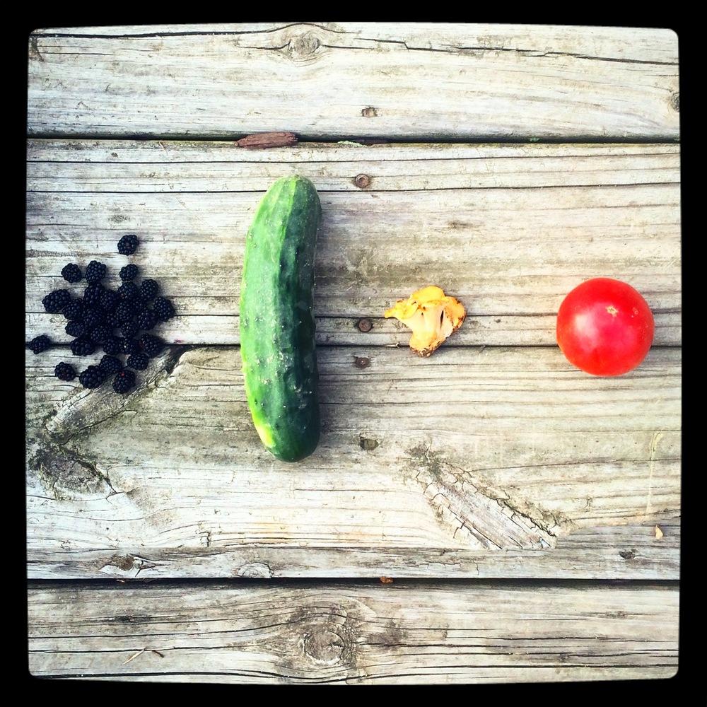 Blackberries, cucumber, chanterelle, tomato: LIFE!
