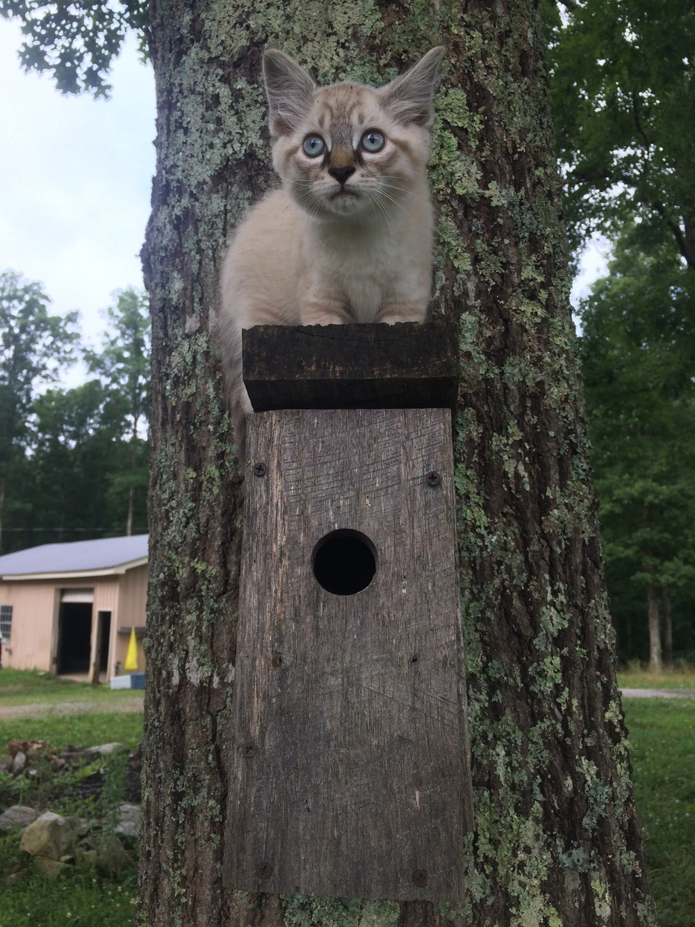 Stormy learns to climb!