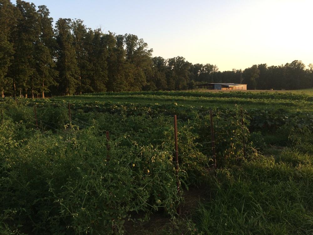 the fields!