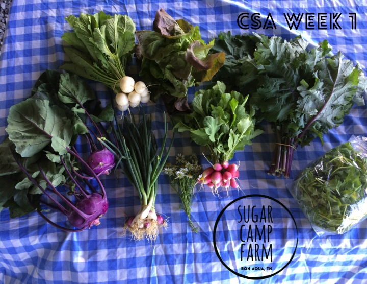 This week's share includes purple kohlrabi, green onions, salad turnips, french breakfast radishes, head lettuce, Red Russian kale, Arugula, mint, and fresh chamomile flowers!