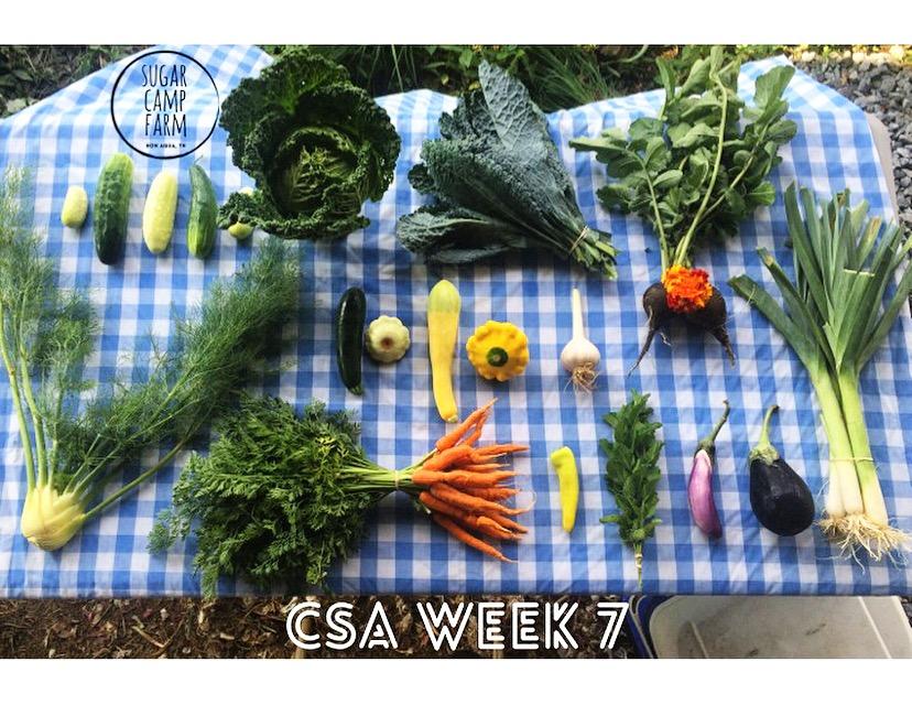 CSA week 7!! Fennel, cucumbers, Savoy cabbage, summer squash, carrots, kale, garlic, a chili, mint, eggplant, black radish, marigolds or squash blossoms, leeks!