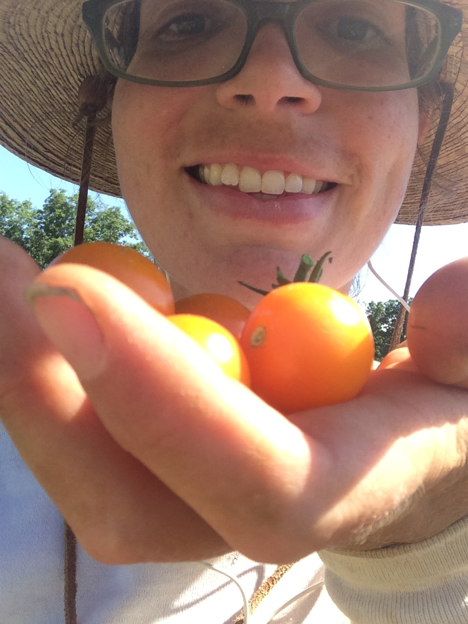 First Cherry tomatoes! Excuse my nose hairs.