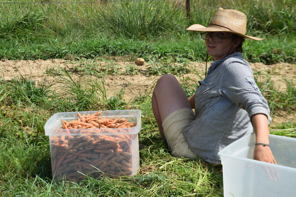 Lizzie pulling the tops off of the carrots!