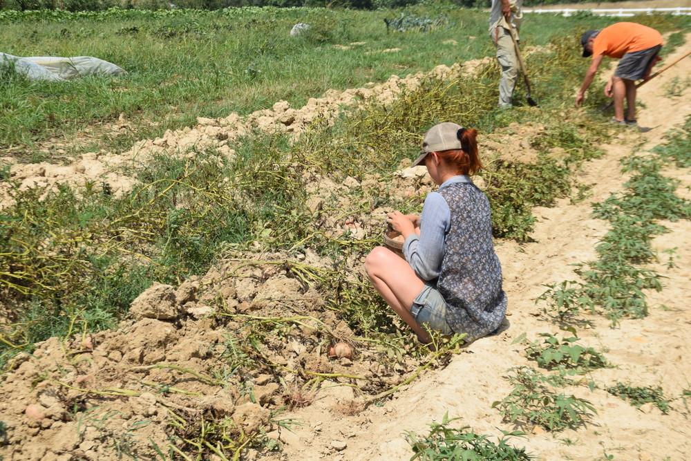 Devan on potato harvest day!