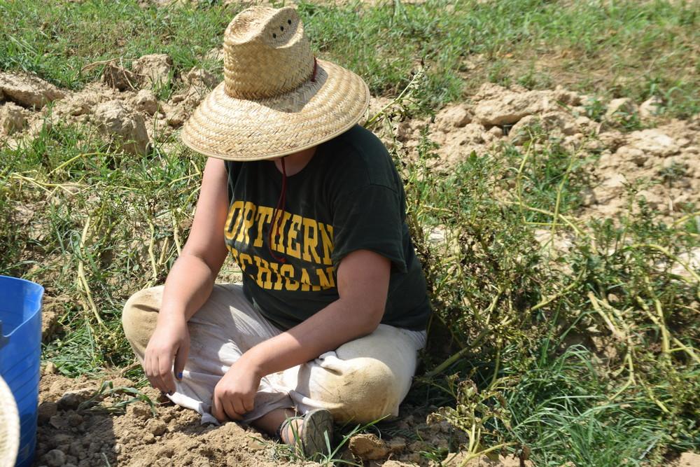 Austeja harvesting potatoes