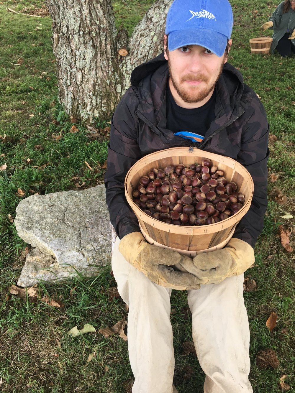 Ty and the chestnuts