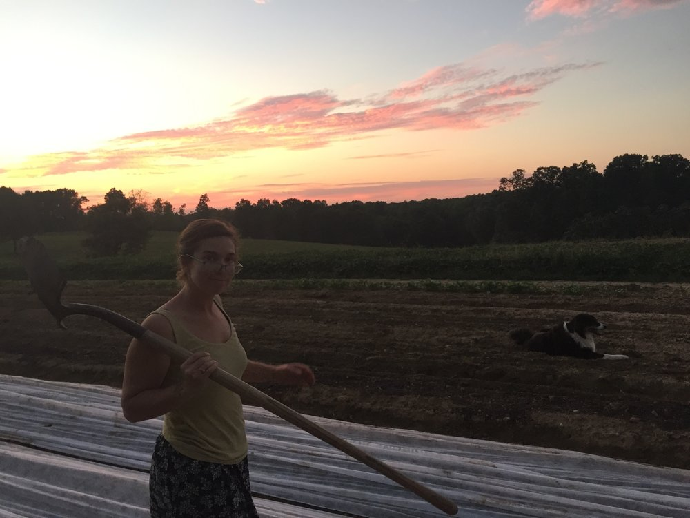 Winnie and I working till sunset getting the row cover back on the cabbage, kale, lettuce, and broccoli after an early hoeing, then letting the sun kill the hoed weeds all afternoon.