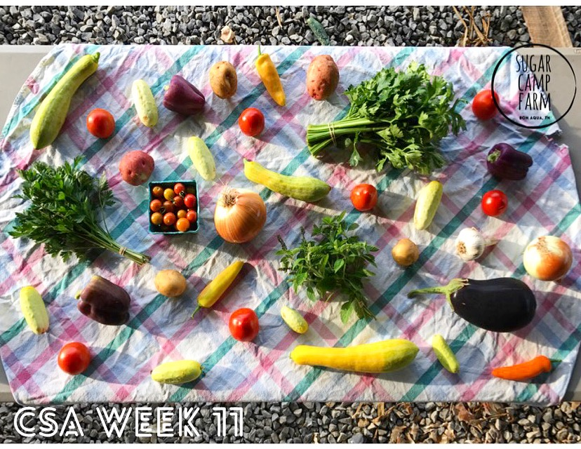 Peppers, cucumbers, summer squash, potatoes, celery, eggplant, cherry tomatoes, parsley, holy basil, tomatoes, onions, garlic, Hungarian hot wax peppers. If we are low on any item during the week we may replace it with green beans. This most likely won't happen, just want to prepare you in case you have certain plans for a meal.