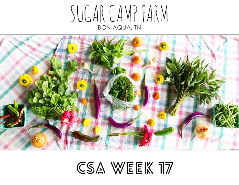 CSA week 17!! Okra, summer squash, pink beauty radishes, onions, eggplant, peppers, hot peppers, basil, mixed baby greens, not quite ripe tomatoes, flowers, sweet potato greens, garlic, green beans!