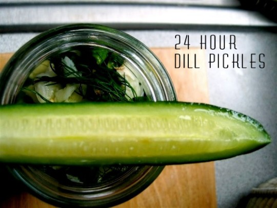 24-hour-dill-pickles-540x405