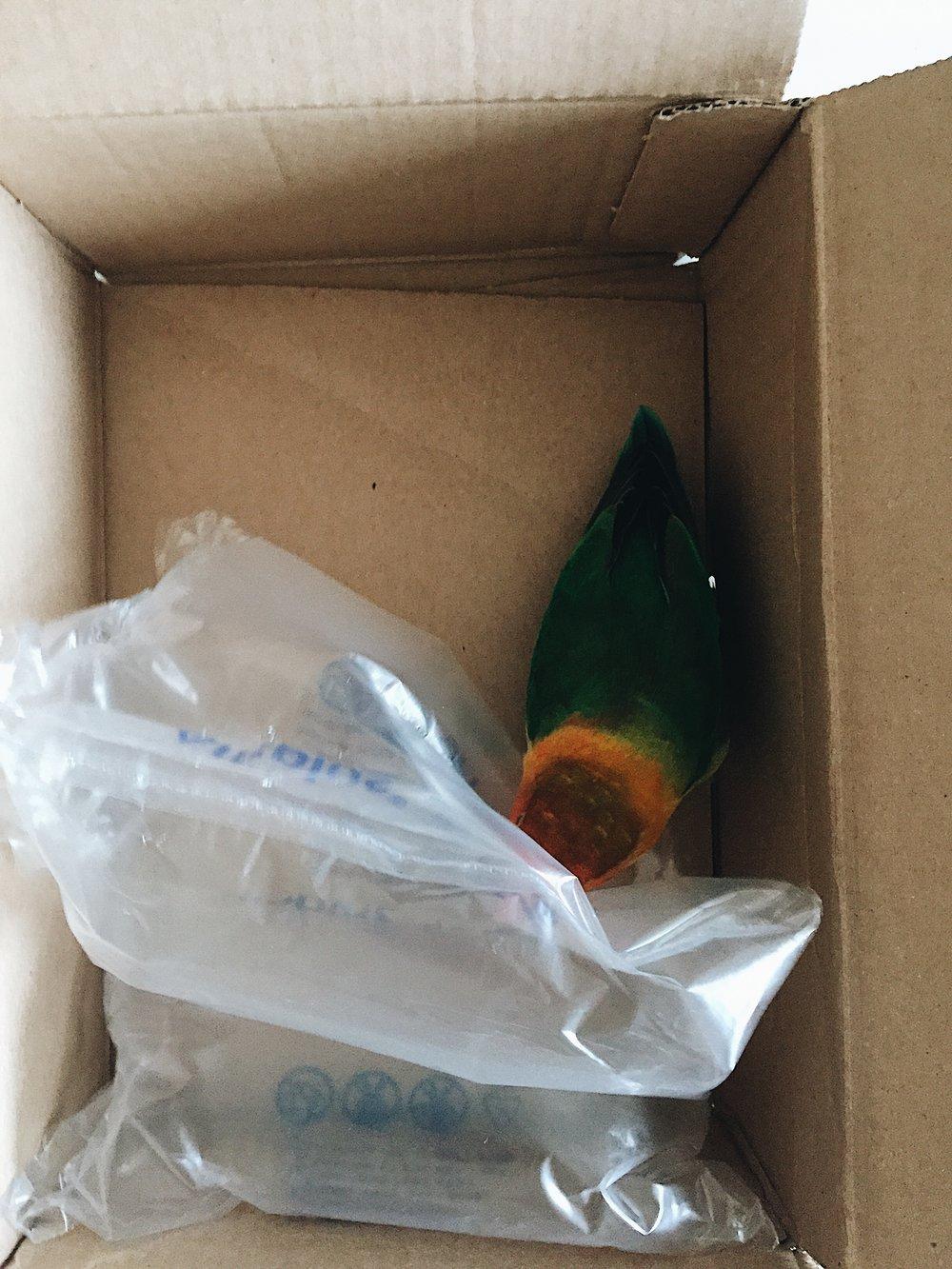 Mango loves mail