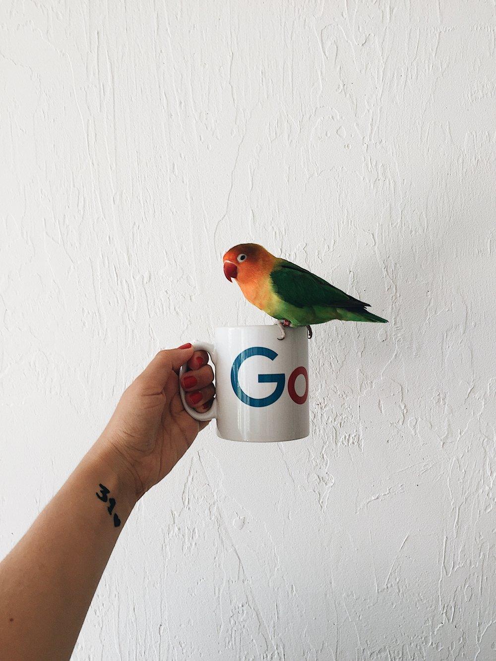 Mango and his Google mug ;)