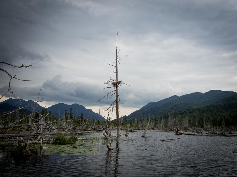 Heron's Nest, Adirondaks