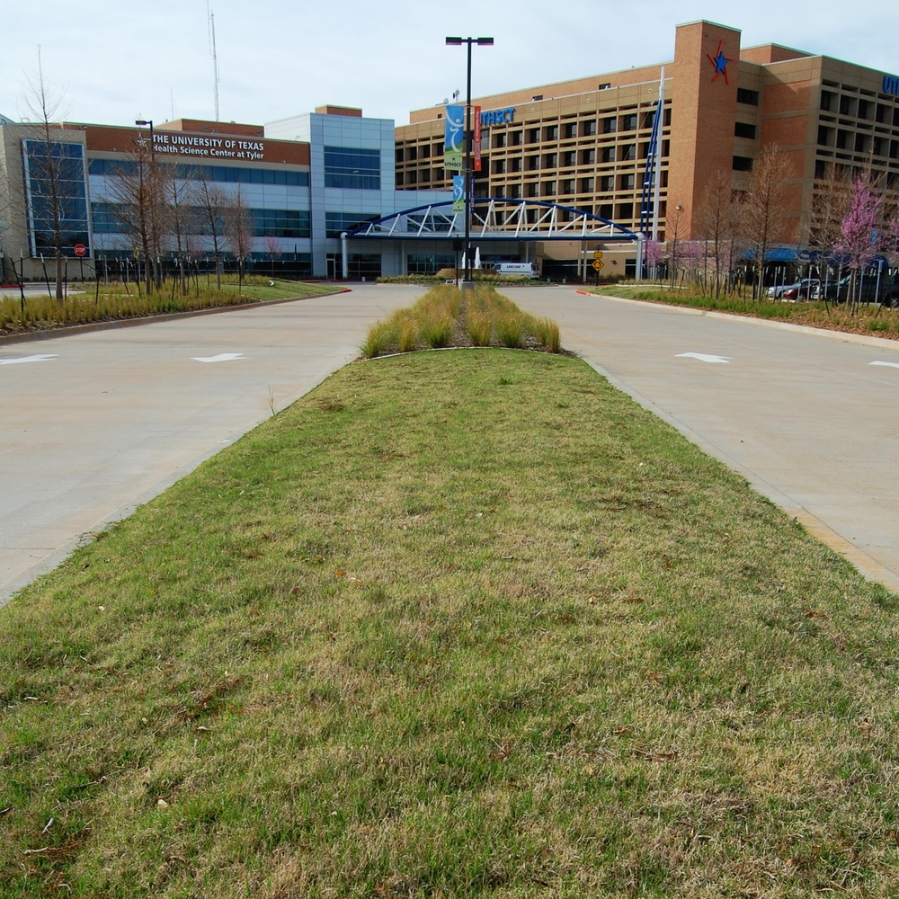 Sod Lawn Median